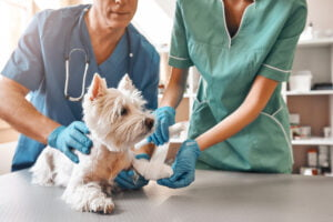 Animal Hospital Collections